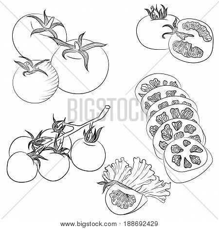 Vector line art illustration with food. Set with various tomatoes. Illustration for menu cookbook or coloring book. Sketch isolated on white background