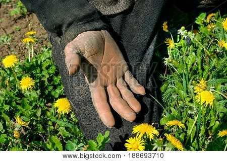 Countryside, spring. One hand of a peasant on vacation. European. Ukraine, Cherkasy region. Colors are black, pink, red, yellow, green.