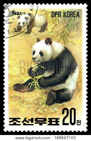 STAVROPOL RUSSIA - May 14 2017: A Stamp sheet printed in North Korea shows Pandas are eating series Pandas circa 1991