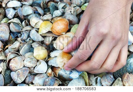 A woman picking up jingle shells or mermaid toenail seashells over a blurred green background on a connecticut beach.