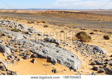 Old Fossil In Bush   Morocco Sahara