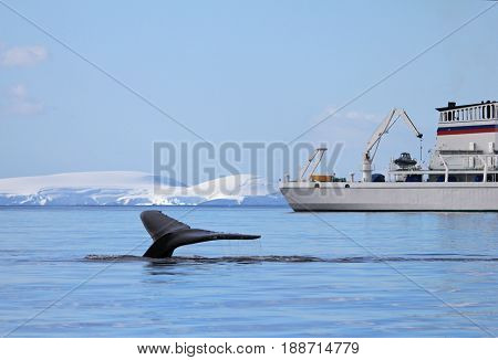 Humpback whale tail with ship, boat, showing on the dive, Antarctic Peninsula