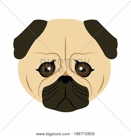 vector color sketch cute serious dog fawn pug breed