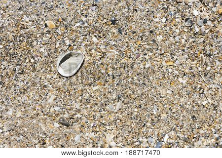 Crushed Sea shells on the beach in place of sand