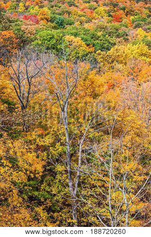 Bright Autumn leaves along this hillside in Harriman State Park in New York.