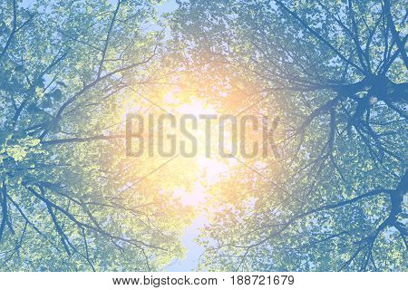 Beautiful forest on the background of blue sky photographed in close-up