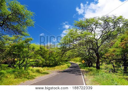 Beautiful Tranquil View Of Maui Landscape With White Clouds Over Green Forest
