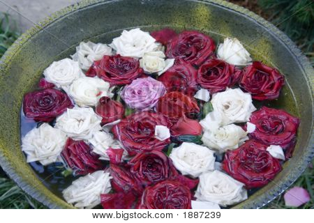 Roses In The Tank With Water