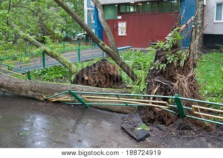 MOSCOW - MAY 29: Trees broken by a hurricane on Konenkova Street on May 29 2017 in Moscow. 11 people died during this hurricane.