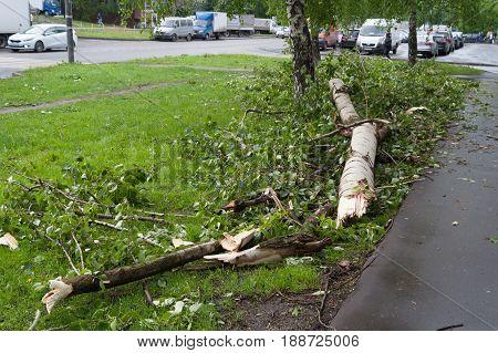 MOSCOW - MAY 29: Tree broken by a hurricane and cars on Konenkova Street on May 29 2017 in Moscow. 11 people died during this hurricane.