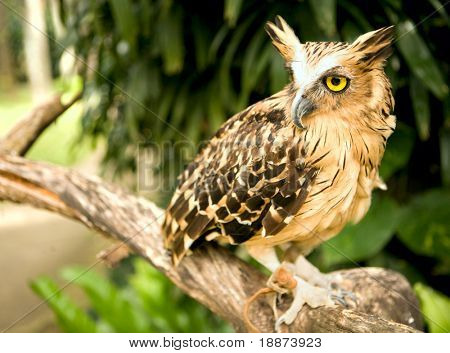 Eagle owl in the wild nature