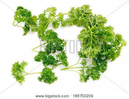 Parsley or garden parsley (Petroselinum crispum) is a species of flowering plant in the family Apiaceae.