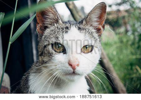 Gray cat portrait in garden