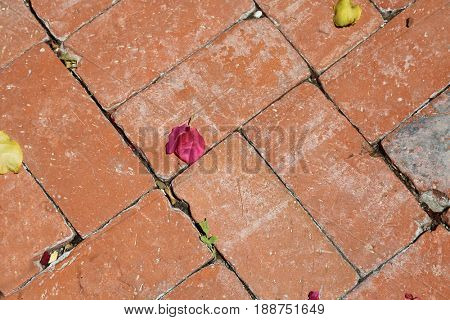 Red brick pattern with Bougainvillea flowers. Background and texture image featuring red bricks, flowers and leafs and dirt.