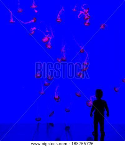 Magical Underwater World aquarium. Adorable little jellyfish in the blue water. A small child watching jellyfish