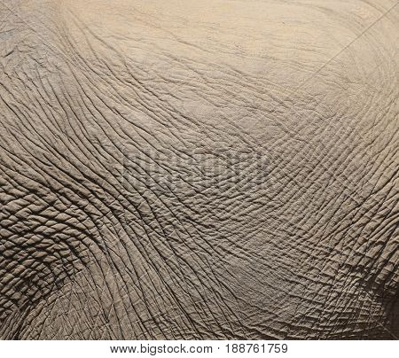 texture of elephant skin.