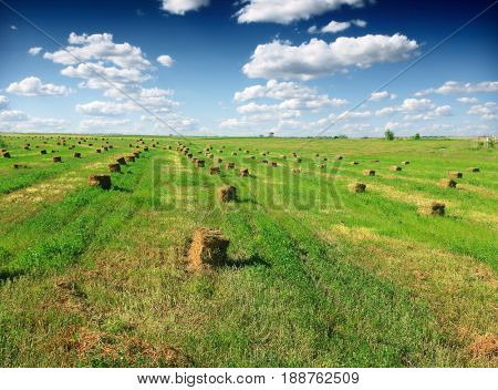 Bales of hay on the farm field