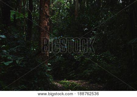 Floresta em meio a cidade de São Paulo, SP, Brasil.