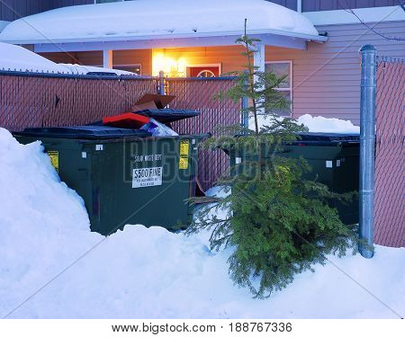 Christmas tree leans against a dumpster in the snow