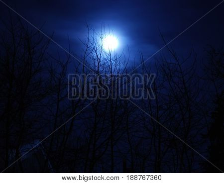Moon rises above bare winter trees