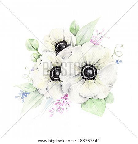 Watercolor illustration of hand painted anemones