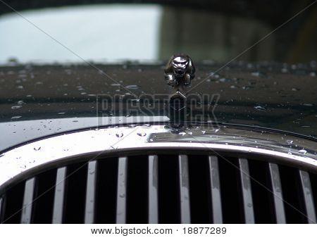 jaguar radiator view