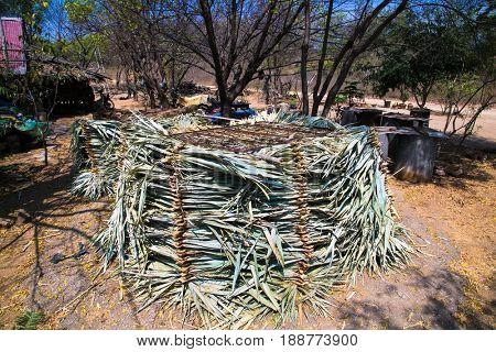 Burmese weaving leaves to make thatch roof, Bagan. Myanmar. (Burma)