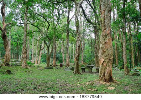 trees in forest at summser