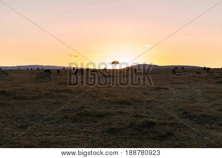 animal, nature and wildlife concept - group of different herbivore animals in maasai mara national reserve savannah at africa on sunset