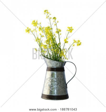 Rapeseed flower in a  zinc pitcher isolated on white background