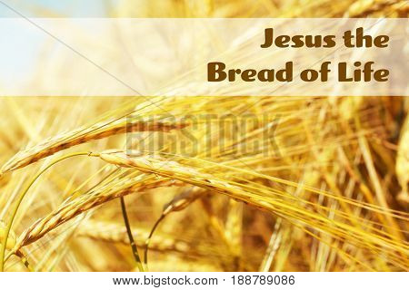 Text JESUS THE BREAD OF LIFE and golden spikes on background