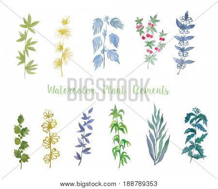 Set of watercolor plants isolated on the white background.