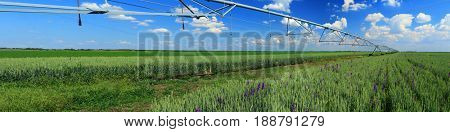 Irrigation Pivot,panorama