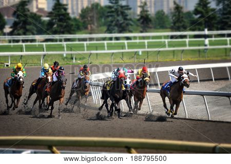 Woodbine, Toronto, Canada - June 17, 2010: Horse racing at Woodbine Racetrack, Canadian race track for thoroughbred and standard bred racing