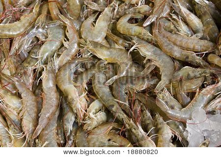 Shrimp on the market in Thailand . poster