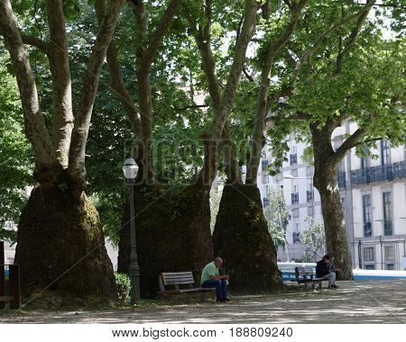 PORTO, PORTUGAL - MAY 8, 2017: People resting in the Cordoaria Garden, or Garden of Joao Chagas. The most striking feature of the garden is an avenue of plane trees with unusually thickened trunks