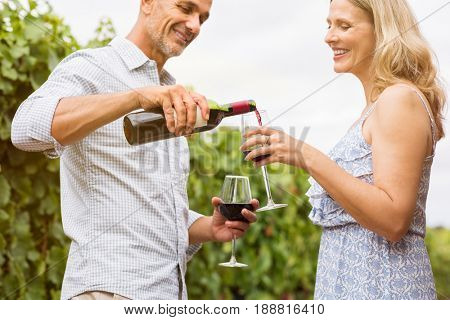 Mature man pouring red wine in glasses for celebrating anniversary with his wife. Happy mature couple in vineyard witha botlle of wine. Smiling mature couple drinking red wine in a vineyards.