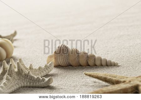 seashell and starfish on beach sand. Sea shell and star fish on background with copy space.