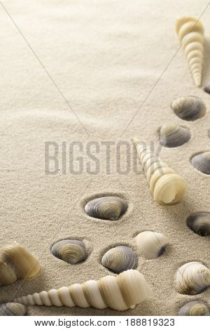 sea shell frame with clamms and spiral shells on the beach sand. Seahell background as concept for summer vacation. Background with copy space.