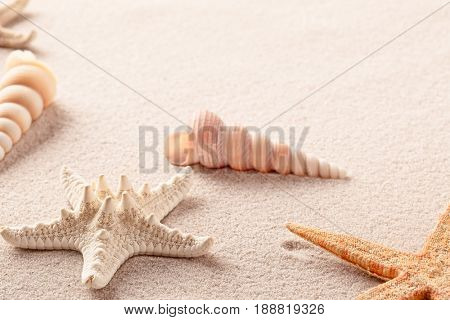 sea star or starfish and shells on beach sand background.