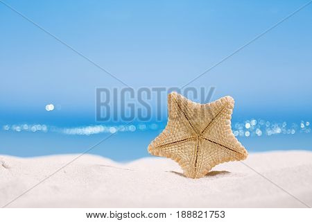 rare deepwater starfish with ocean, on white sand beach, sky and seascape, shallow dof