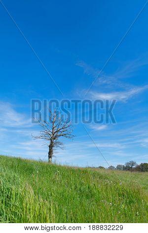 Dead tree alone in landscape