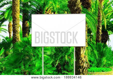 Blank billboard with a space for your information, tropical paradise background with big green palm leaves