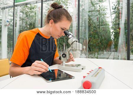 Botanist Examining Plant Samples Under Microscope While Using Digital Tablet