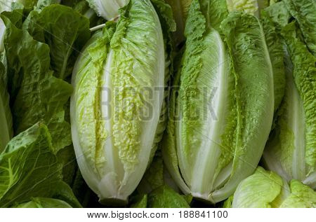 Fresh juicy Chinese cabbage close up