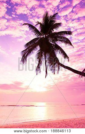 Palm Paradise Bay View