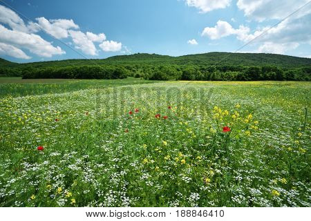 Spring meadow of flower. Nature composition.