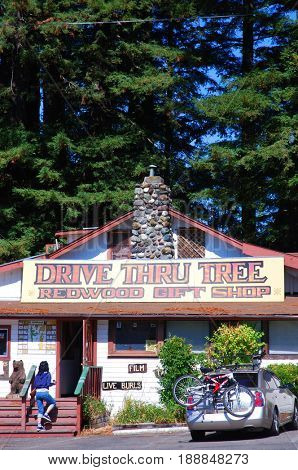 LEGGETT, CALIFORNIA, USA - September 2, 2009: Visitor enters the Drive Thru Tree Redwood Gift Shop near Redwood National Park in Northern California