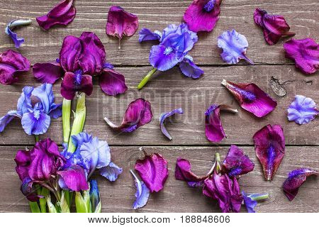 Creative layout made of iris flowers and petals. Flat lay. Nature background