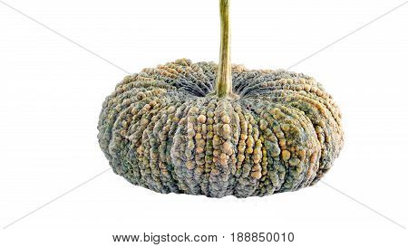 Pumpkins are grown all around the world for commercial and ornamental sales. Pumpkins are a warm weather crop. When ripe, the pumpkin can be boiled, steamed, or roasted.